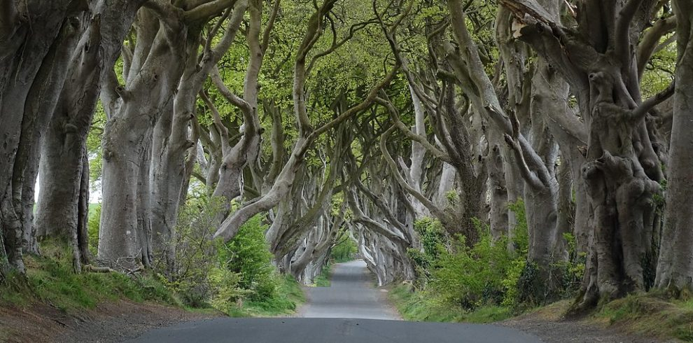 Dark Hedges Game of Thrones Northern Ireland